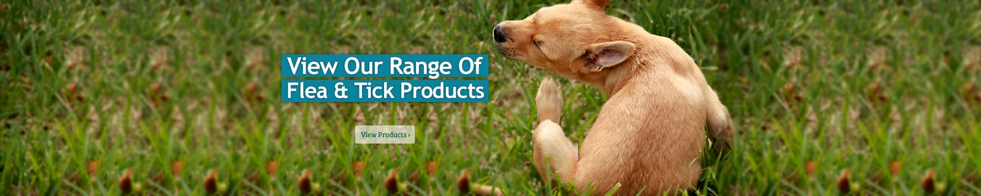 Fleas and Ticks feature products!