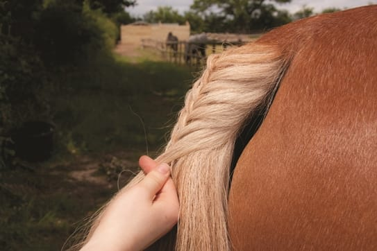 horse tail plait small