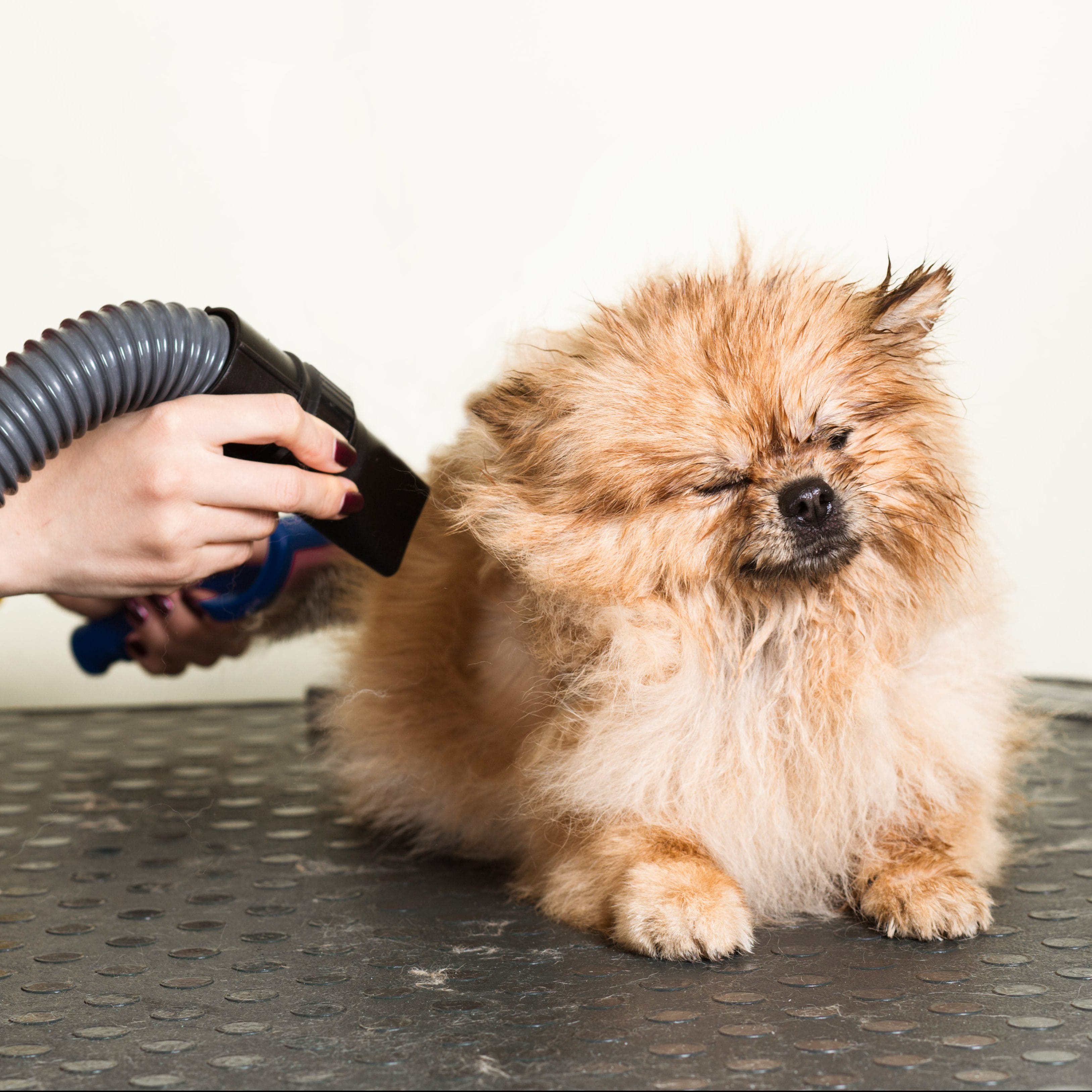 How To Prevent Lung Damage From Pet Grooming | Groomers | Blog