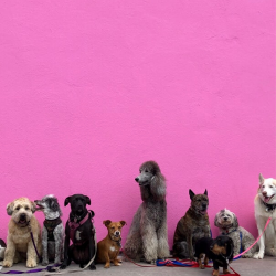 dogs in hollywood