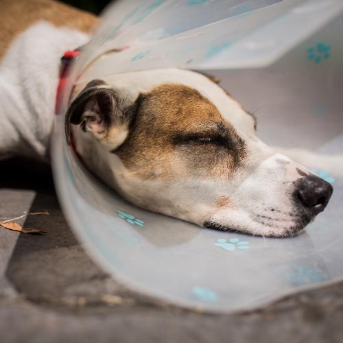 Dog wearing a cone collar