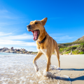 Happy dog plodging on the beach