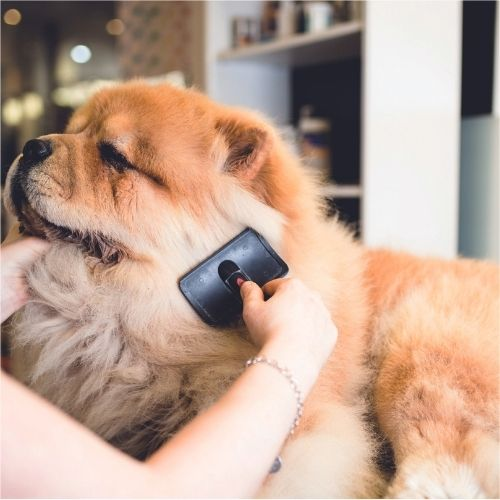 how to keep a dog calm whilst grooming them