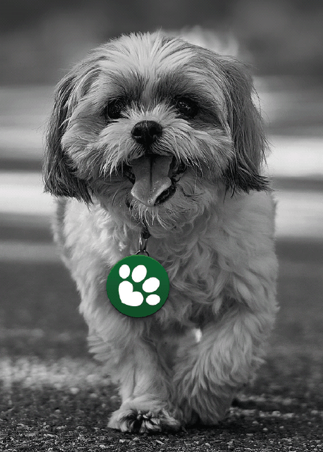 Black and white image of dog with pro treats logo on collar