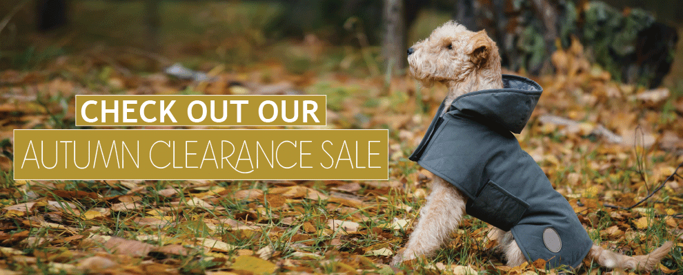 Check Out Our Autumn Sale!