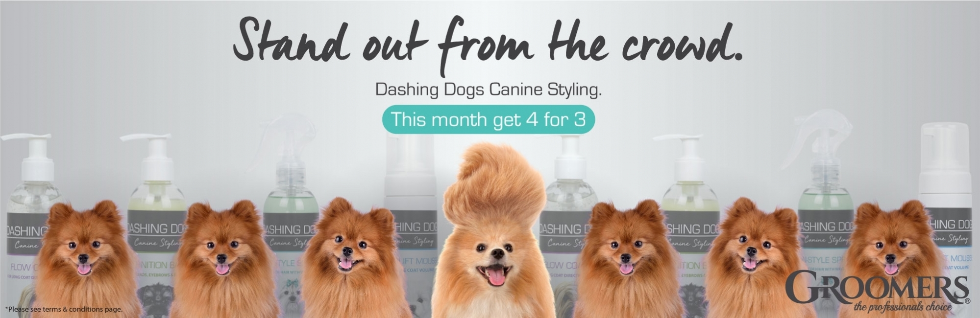 4 For 3 On Dashing Dogs